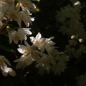 卯の花浮かぶ