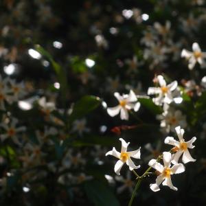 白い花の日