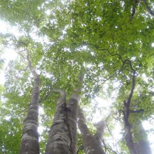 西播磨の森