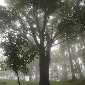 巨樹のポートレート