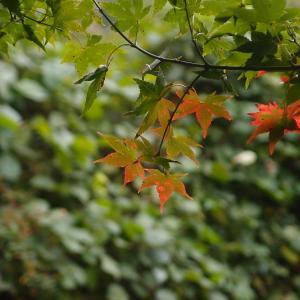 ほんのりと秋
