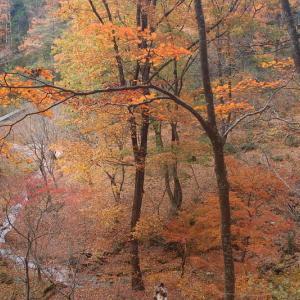 麓の森の彩り