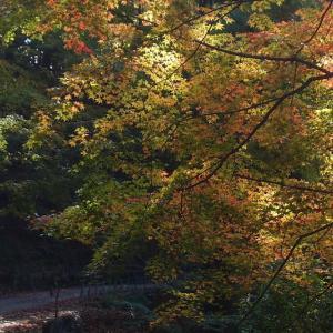 林道の彩り
