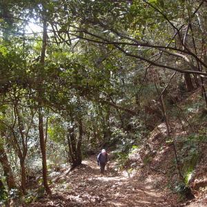 甲南パノラマ道
