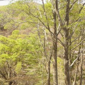 若狭側の森