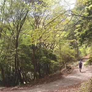 新緑の林道を下る