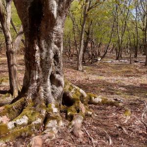 谷間の巨木