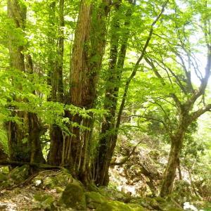 新緑の桂の谷へ