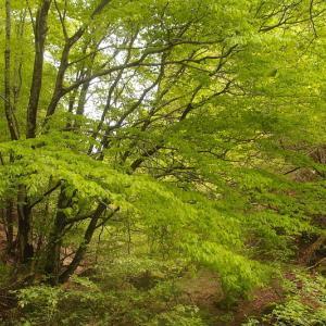 谷間の新緑