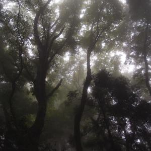 梅雨の散歩道