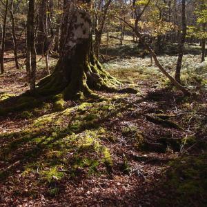 明神平の東の森