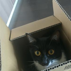 猫さまのお相手