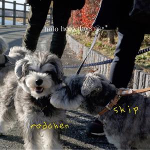 スキップとお出かけ山中湖*〜ダイアモンド富士〜