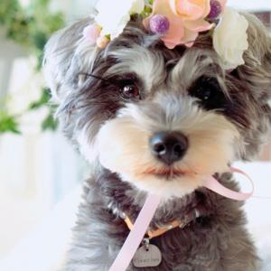 flower tiara tokoyからお知らせ*