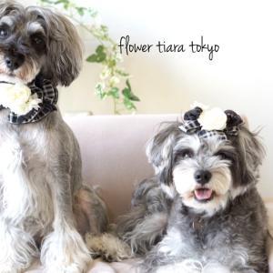 flower tiara tokyoからのお知らせです*