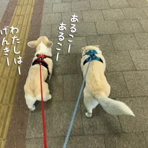 ふたりでお散歩。