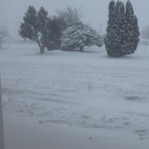 大雪、そして約束のネバーランド