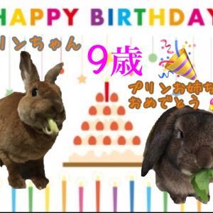 プリンちゃんのお誕生日♡