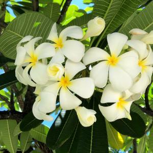 私にとってのハワイ