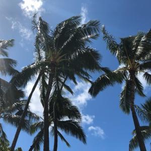 思い出ハワイ 3
