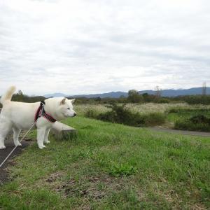 散歩の帰り道