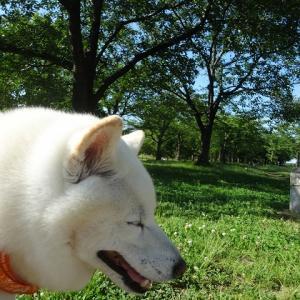 のんびり公園へ