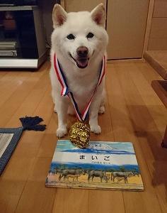 金メダル級