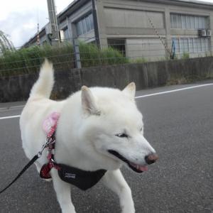 散歩のスピード