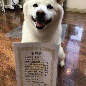 長寿犬表彰状!