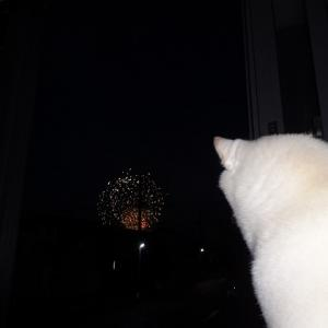 花火と犬の写真の撮り方を考えてみる