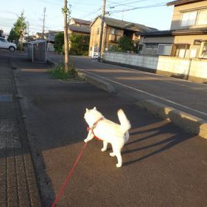 散歩の準備