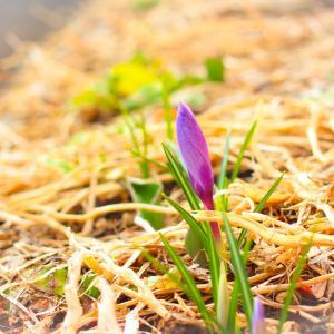 2019年4月ともに通信~小さな春