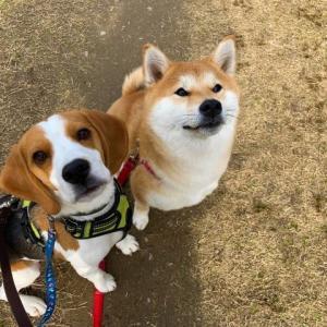 犬の飼い主さん集まれ!!~ともにミニ講座