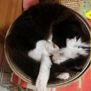 摩訶不思議な寝相の猫たち