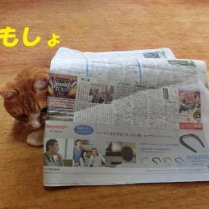 ぬくもりを求める猫