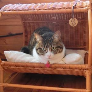 毎日朝寝の場所が違う猫
