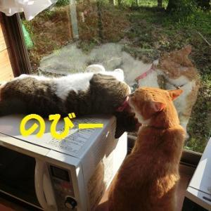 朝からイチャイチャする猫たち