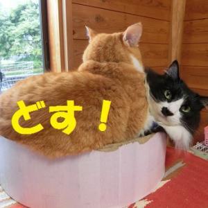 ふかふか猫ベッドで寝る猫