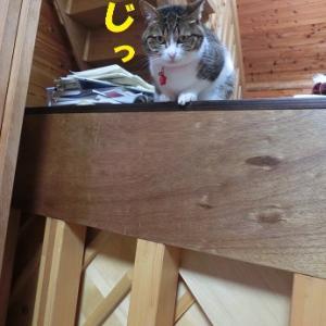 下界を眺める猫