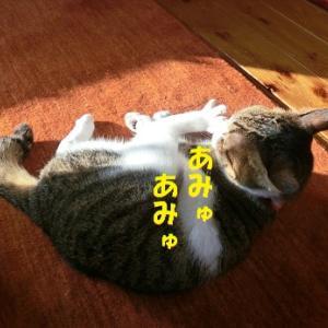 朝から気を抜かない猫