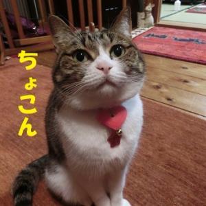 チーズが食べたい猫