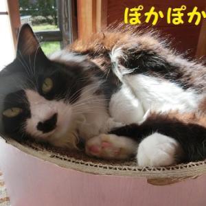愛嬌をふりまく猫とふりまかない猫