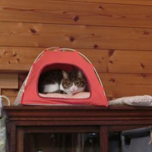 幸せの場所にいる猫