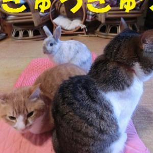 実力行使が過ぎる猫