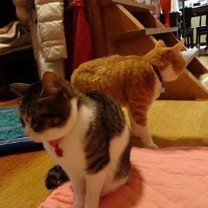 姉の後ろに控える弟猫