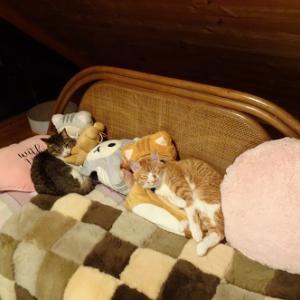 ぬいぐるみにまぎれた猫