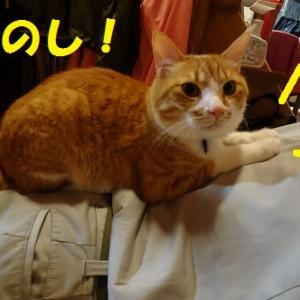 しもべができた猫