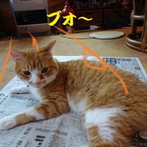 あたたかさを求める猫