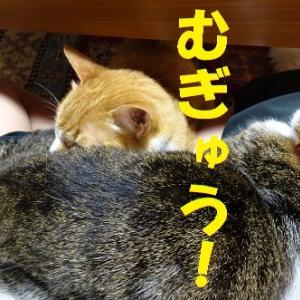 乗っ取った猫