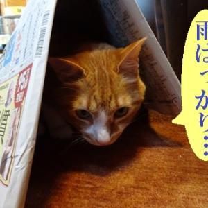 湿気から逃れる猫